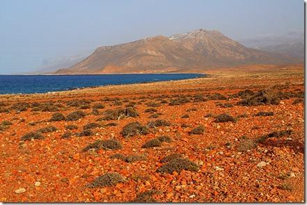 socotra_island_yemen